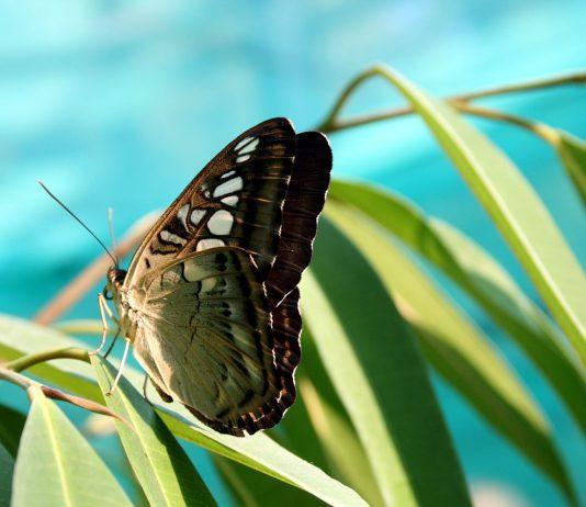 Vlinder bij Levend Verlies